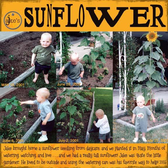 Jakessunflower
